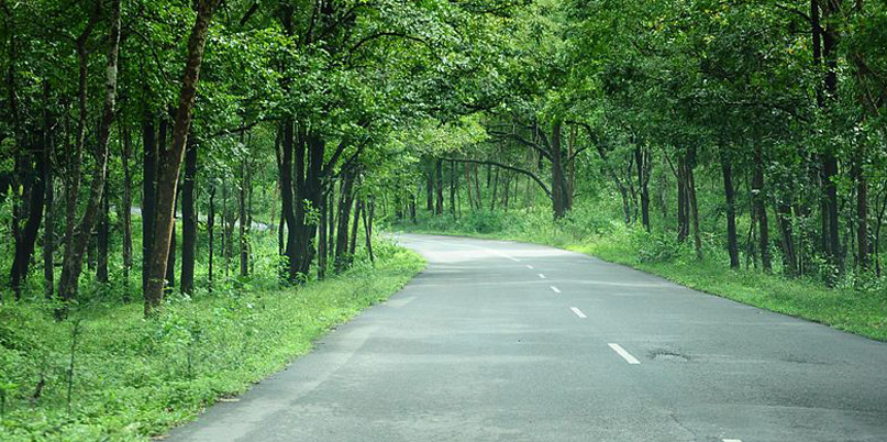 Bangalore to Ooty road trip, Bandipur National Park, Best Road Trips in India, Tata Motors
